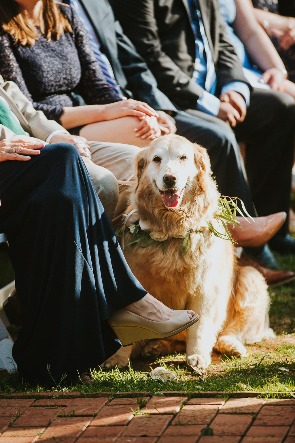 ALSO, our dog Molly, a 10 year old golden retriever is going to be our flower dog!!